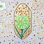 Narcissus Flower Petals Poster