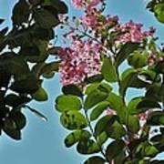 Nashville Flowers Poster