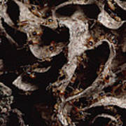 Nasute Termite Nest Amazonian Peru Poster