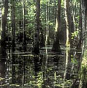 Natchez Trace Cypress Poster
