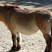 National Zoo - Donkey - 01134 Poster by DC Photographer