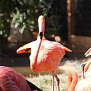 National Zoo - Flamingo - 01133 Poster by DC Photographer