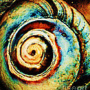 Native Spiral Poster by Daniele Smith