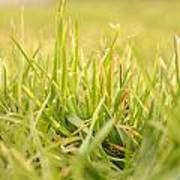 Natural Grass Poster