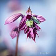Natural Bug Life Poster