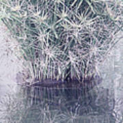 Natural Reflections Poster