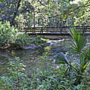 Natural Springs Poster