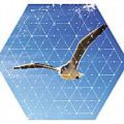 Nature And Geometry - The Seagull Poster