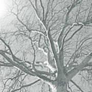 nature - art - Winter Sun  Poster