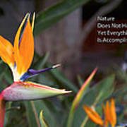 Nature Does Not Hurry Bird Of Paradise Poster