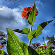 Nature Does Not Hurry Zinnia Standing Tall Poster
