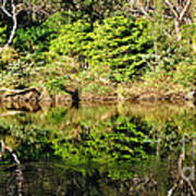 Nature Mirrored Poster