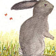 Nature Wild Rabbit Poster