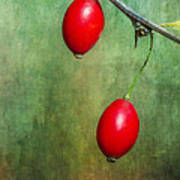 Nature's Baubles Poster
