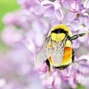 Natures Buzzing Beauty Poster