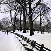 Nature's Canvas On A Wintry Day Poster