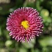 Nature's Full Bloom  Poster