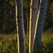 Natures Glow Poster