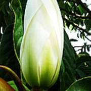Nature's Light Bulb Poster