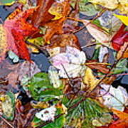 Nature's Paintbrush Poster