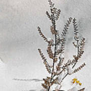 Natures Snow Coat Poster