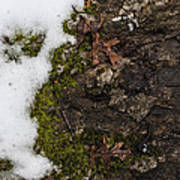 Nature's Still Life Poster