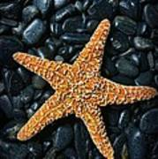 Nautical - Starfish On Black Rocks Poster