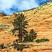 Navajo Sandstone Poster