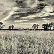 Nebraska Prairie One In Black And White Poster
