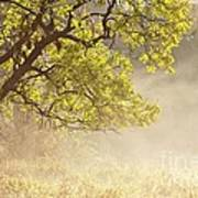Nebulous Tree Poster by Heiko Koehrer-Wagner