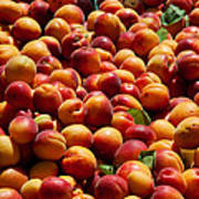 Nectarines For Sale At Weekly Market Poster