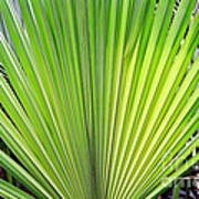 Needle Palm Poster