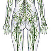 Nervous System, Illustration Poster