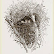 Nest Of Magpie Poster