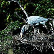 Nesting Season Poster