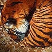Nestled Tiger Poster