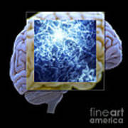 Neuron And Brain Poster