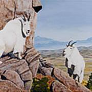 Nevada Mountain Goats Poster