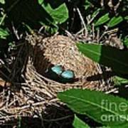 New Life - Robin's Nest Poster