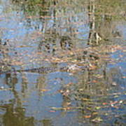 New Orleans - Swamp Boat Ride - 121262 Poster