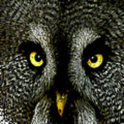 New Photographic Art Print For Sale   Great Grey Owl Poster
