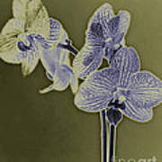 New Photographic Art Print For Sale Orchids 10 Poster