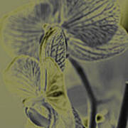 New Photographic Art Print For Sale Orchids 11 Poster