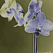 New Photographic Art Print For Sale Orchids 9 Poster