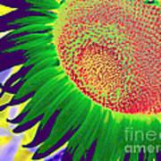 New Photographic Art Print For Sale Pop Art Sunflower 2 Poster