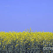 New Photographic Art Print For Sale Yellow English Fields 2 Poster