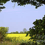 New Photographic Art Print For Sale Yellow English Fields 3 Poster