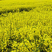 New Photographic Art Print For Sale Yellow English Fields 4 Poster