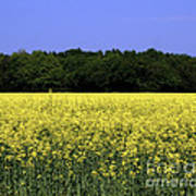New Photographic Art Print For Sale Yellow English Fields Poster