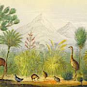 New Zealand Kiwi, Takahe, Extinct Moa Poster
